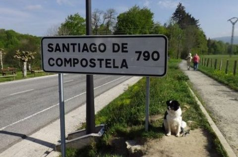 In cammino a Santiago con Luna, border collie